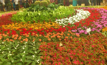 35th Cochin Flower Show